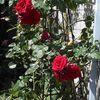たわらや花壇は《夏の終わり》
