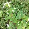 種まきしました♪つづき♪草花の成長