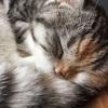 チェンライの猫カフェ「CAT 'n' A CUP」が天国過ぎた話