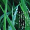 本日20日は暦上で『穀雨』!八十八夜のお茶は古来より不老長寿の縁起物なので、ぜひ飲もう♪