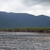 〈忘れ潮〉の沖縄紀行2016…西表島 ②/    マングローブの森に熱帯雨林のスコールか!?