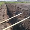 ファームウェルにおける農業