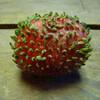 発芽したイチゴの気色悪さは異常