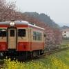 いすみ鉄道 桜&菜の花