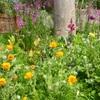 春爛漫 モネの庭 (1)