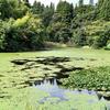 臥蛇池(新潟県上越)