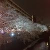 中目黒の夜桜 目黒川桜まつり2017