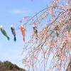 Snapshot ~『桜 2021』 #12