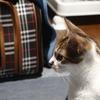 【猫がくしゃみ】病院に連れて行ってみた。猫風邪の治療費はいくらかかった?