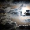 Blue Moon Of Kentucky~眩い夜明けの予感