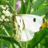 春の小石川植物園、見どころベスト30(基準は昆虫記者の独断と偏見)