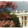 アメリカ大統領選挙をネタにしたホテルパッケージ