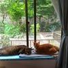 猫との暮らし、夏