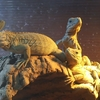 齧歯類と爬虫類と両生類(第2日目)