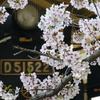今年も桜とD51