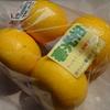 紀州の柑橘類_春光柑