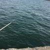 3月12日 横浜・根岸湾サバ爆釣