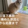 猫の落下事故後初めてのアクシデント!?手首を痛めてしまった原因と症状から処置までについて