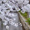 木屋町・高瀬川の桜🌸  -京都桜散歩2018-