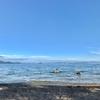 琵琶湖でフィーバー