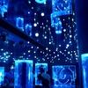 【アクアパーク品川】都内最大級のイルカショーと希少展示が楽しめる水族館