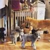 都内の犬カフェに行ってみた!DOG HEART from アクアマリン