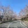 再びの坂を溢るる桜かな(あ)