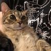 【猫画像】キジトラ猫の目がランランとまぶしいので書いていく