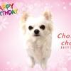 シュシュ2歳の誕生日