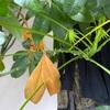 枯れてゆく葉に新しい芽吹き