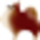 雑種のポメラニアン