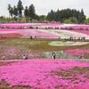 今日の景色 04/29 芝桜と藤