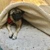 1049: 犬のある人生。