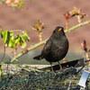 鳥のツイートをドイツ語で