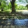 ◆夏至のエネルギー「完全性=内なる神性」
