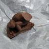 バレンタインの蛙チョコを食べた