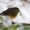 日本 雪の文殊の森公園で出会った野鳥たち