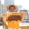 現在の日本では、鉄鋼の森に「都市養蜂」が流行している