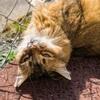 【一日一枚写真】神戸のソマリ猫②【一眼レフ】
