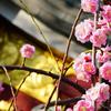 亀戸天神と香取神社の梅まつり【2018.2.14】