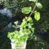 水耕栽培キットのおすすめ5選!費用や作れる野菜を徹底調査【2018年】