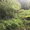 昨日は、竹との戦いでした。