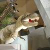【古生物紹介】ティラノサウルス