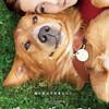 映画『僕のワンダフル・ライフ』と原作小説『野良犬トビーの愛すべき転生』(ネタバレありの感想)