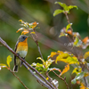 2019年10月20日の鳥撮り-神戸