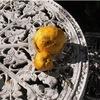 花梨と立寒椿