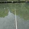 大川戸つり堀【釣り開始。我が子は魚を釣ることができるのか?】