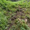 牛の山登りと竹林の役割