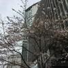 桜満開の東京~22日(月)から24日(水)