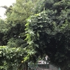 木を伝ひより高みへと青糸瓜(あ)